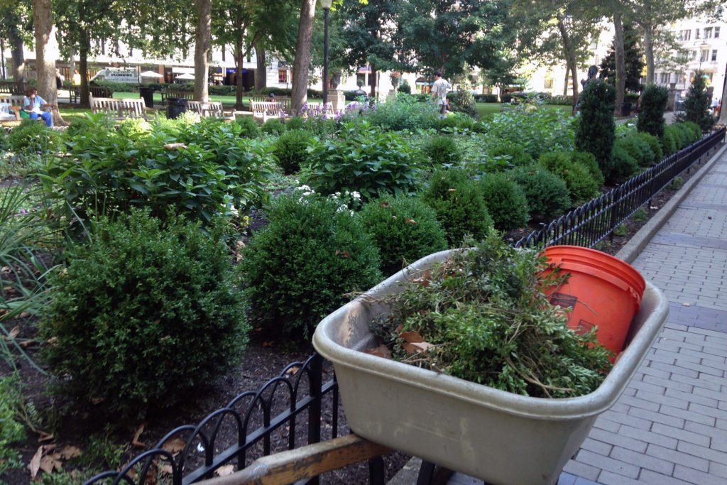 3-rsq-boxwood-pruning