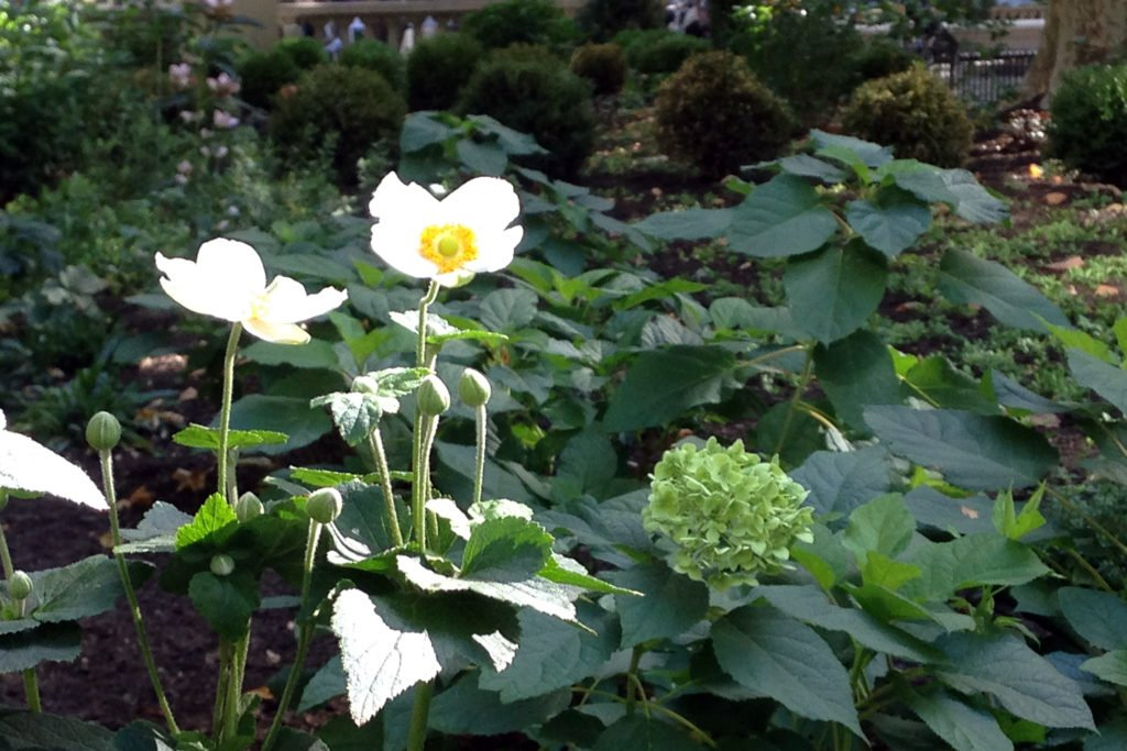 4-rsq-anemone-and-hydrangea