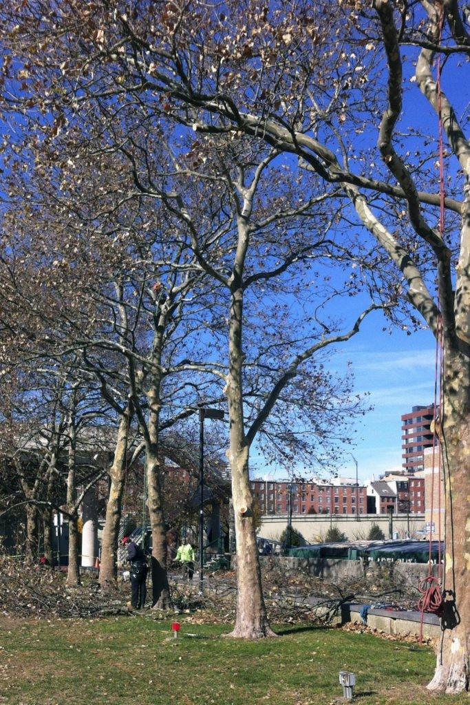 4-tree-pruning