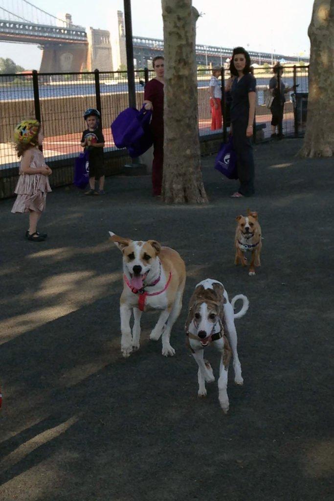 6-dog-run