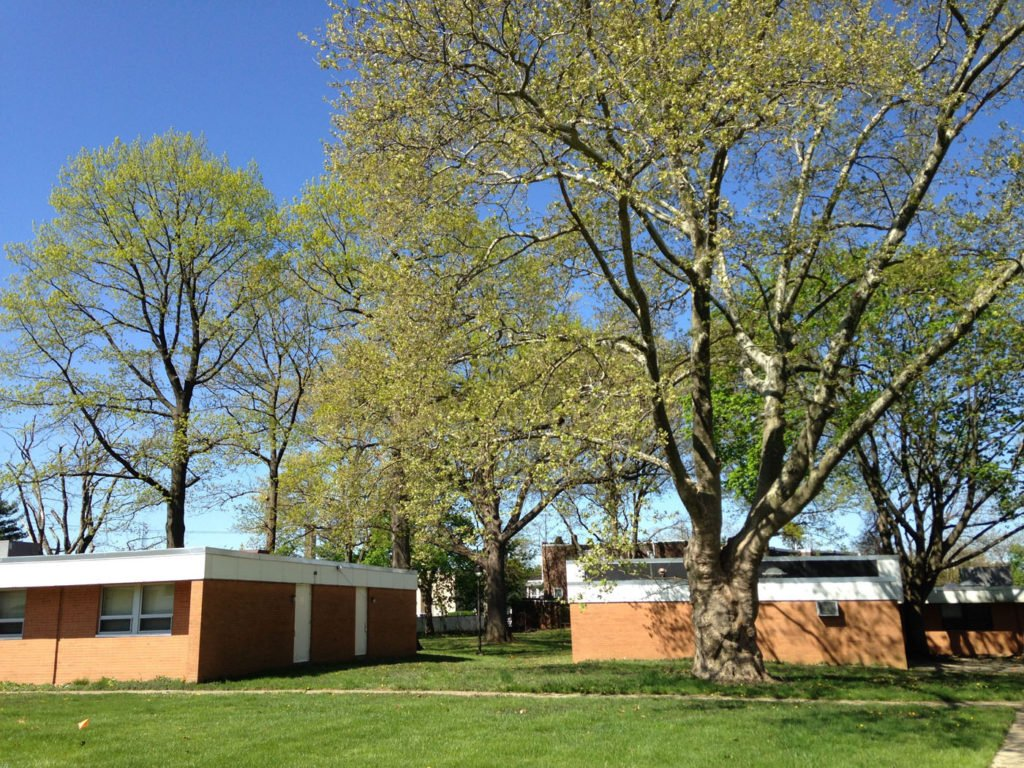 saesc-image-2-exg-buildings-and-trees
